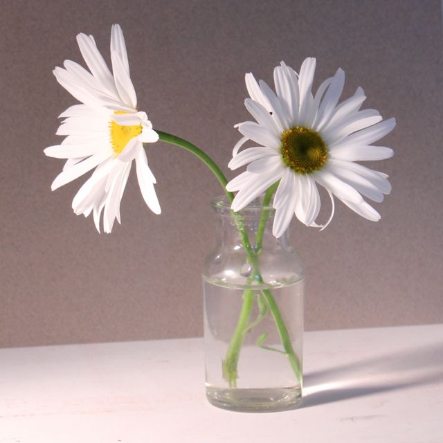 Daisies in a Vase - the set-up