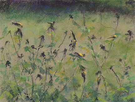 "Donna Yeager, ""Finch Feast,"" pastel on Canson Mi-tientes paper, 9 x 12 in - the original pastel used in the digital collage above"
