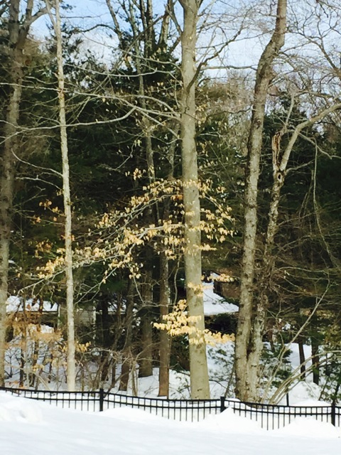 """Maureen Spinale: My reference photo used for the placement of the trees in """"A River Runs Through It."""""""