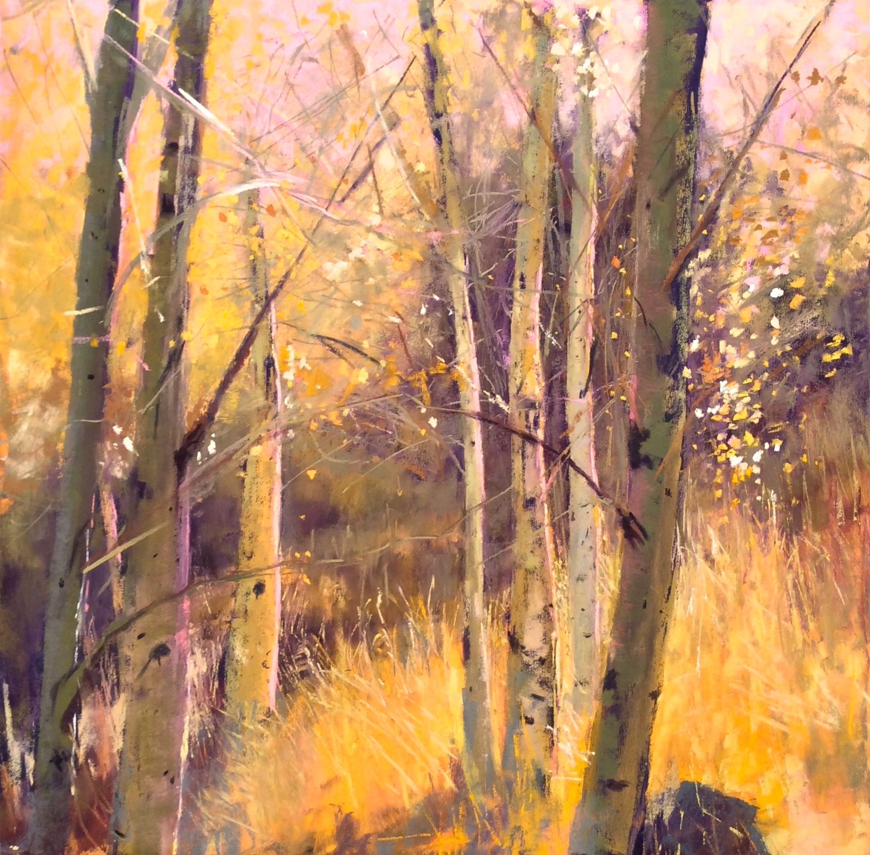 "Maureen Spinale, ""Joy, Peace & Hope,"" pastel painted on UArt 400, 18x18 in. I was just so taken by the light in this stand of Aspens, made me thankful to be among them."