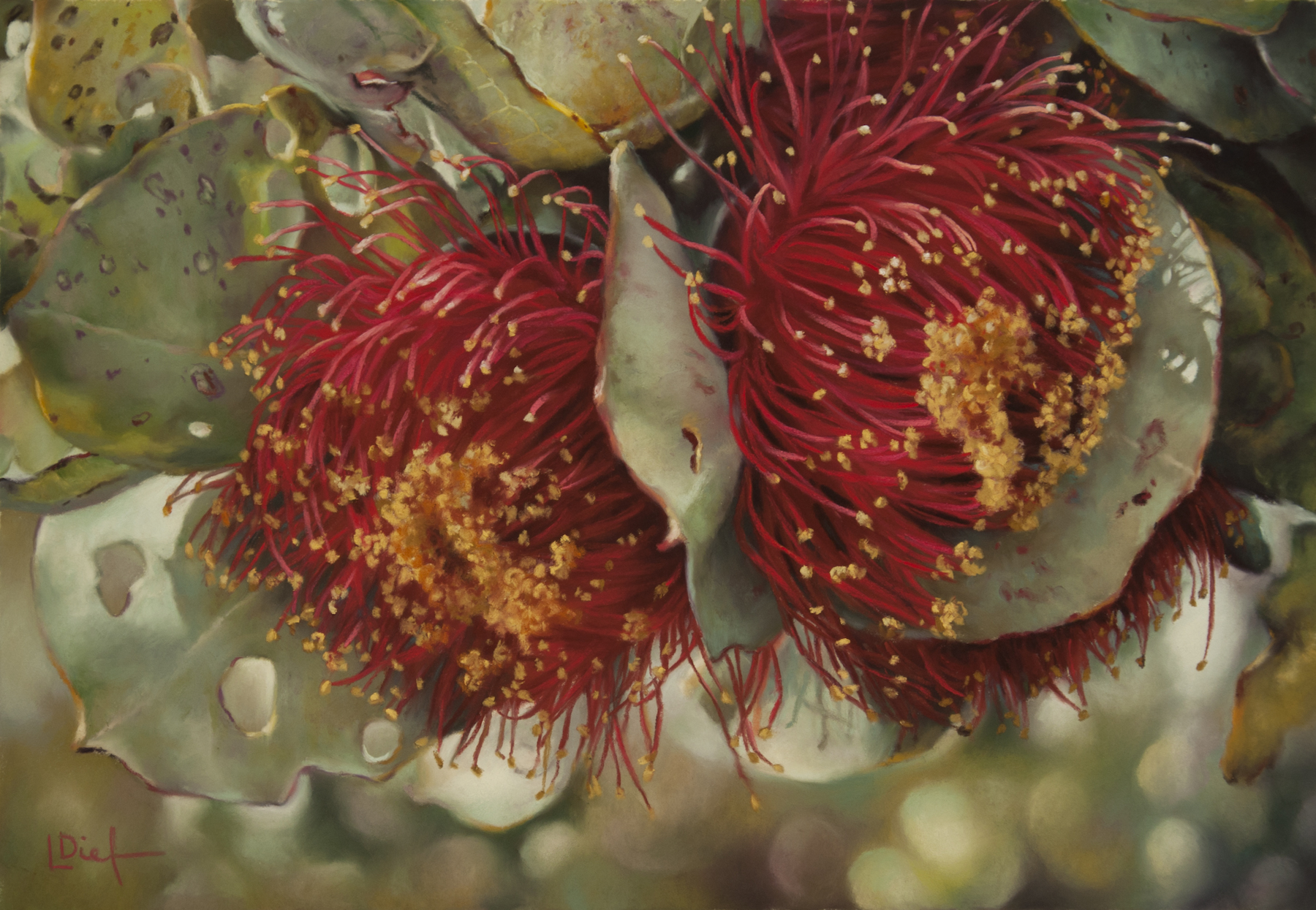 "Lyn Diefenbach, ""Bush Tango,"" March 2017, Pastel on Fisher 400, 13 1/2 x 19 in. Sold. These complicated eucalypt flowers can be simplified by first making a general form of colour and then using different values to describe the tendrils."
