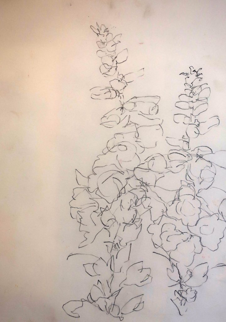 Debora Stewart - dessin de fleur de contour